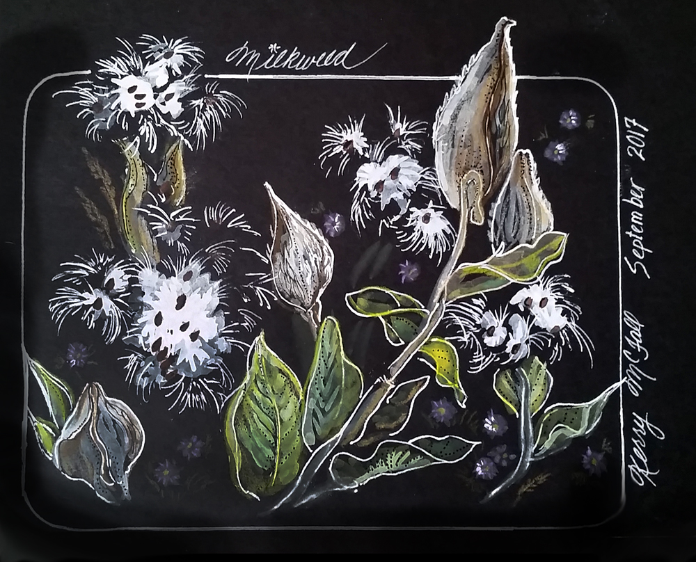white ink sketch on black paper of milkweed pods and sees
