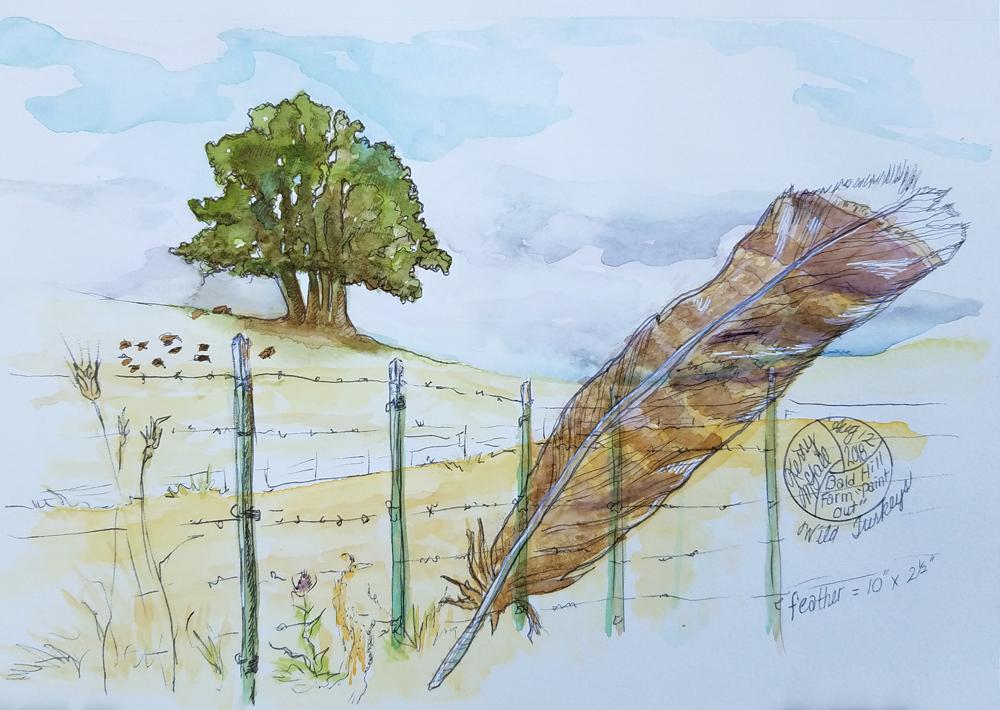 oaks on a hill plus a turkey feather