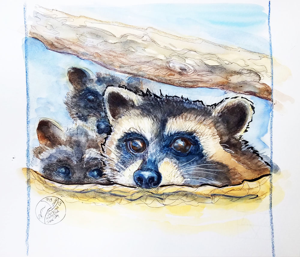 Three young raccoons
