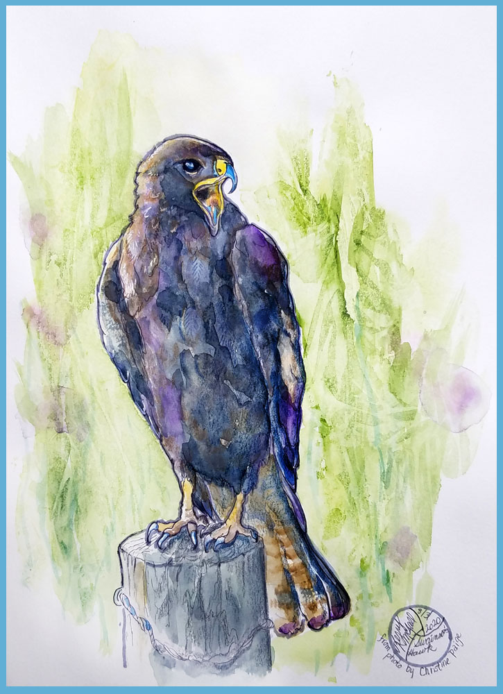 Swainson's Hawk painting