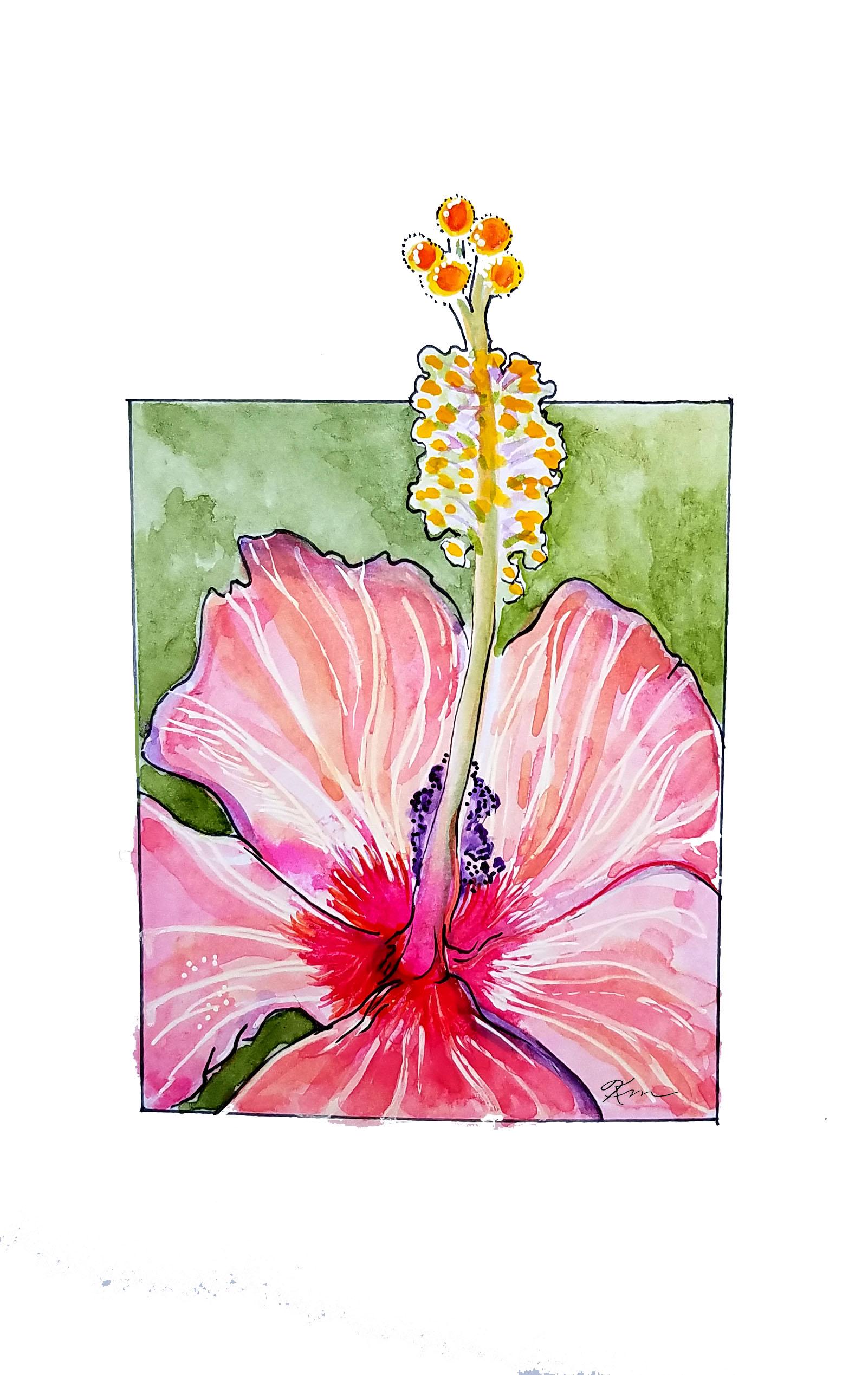 Pink Hibiscus closeup
