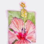 Warped Frame Pink Hibiscus